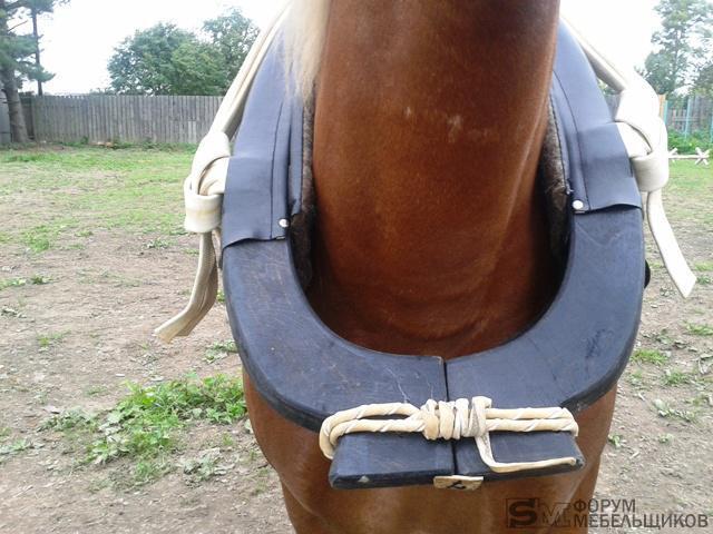 Хомут на лошаде.jpg