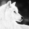 @werewolf@